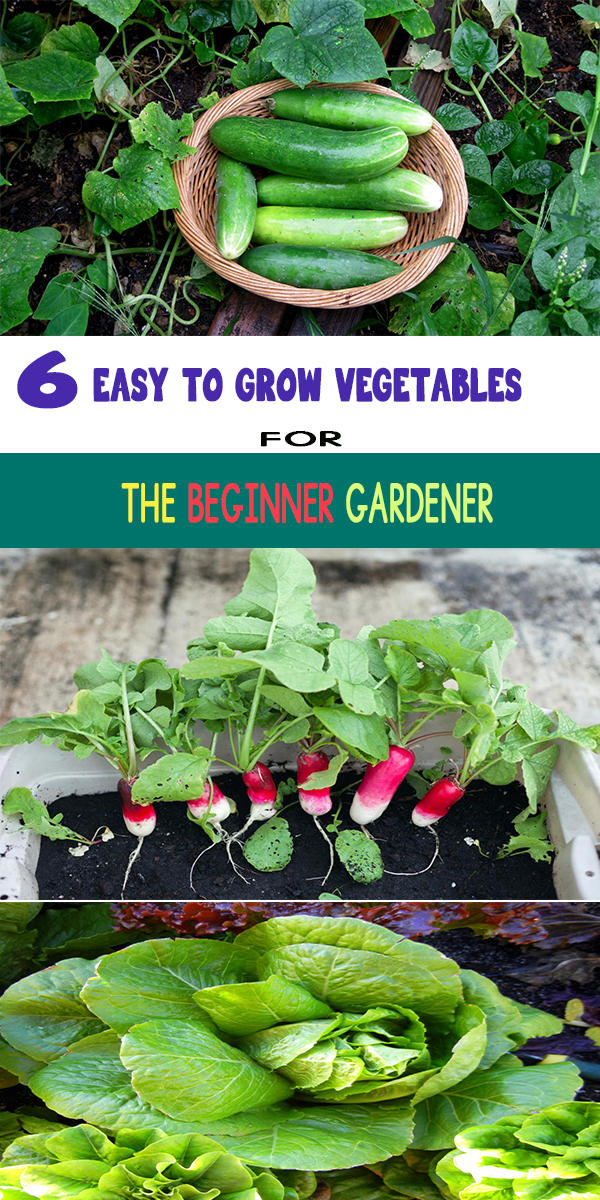6 easy to grow vegetables for the beginner gardener for Easiest vegetables to grow